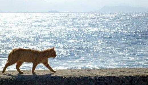 猫が脱走する理由と探し方!脱走防止対策にはこれが便利!
